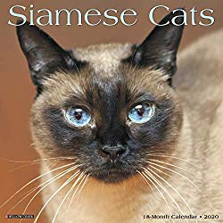 Siamese Cat Calendars 2020 Great Gifts For Cat Lovers Siamese Cats Siamese Cats For Sale Cat Calendar
