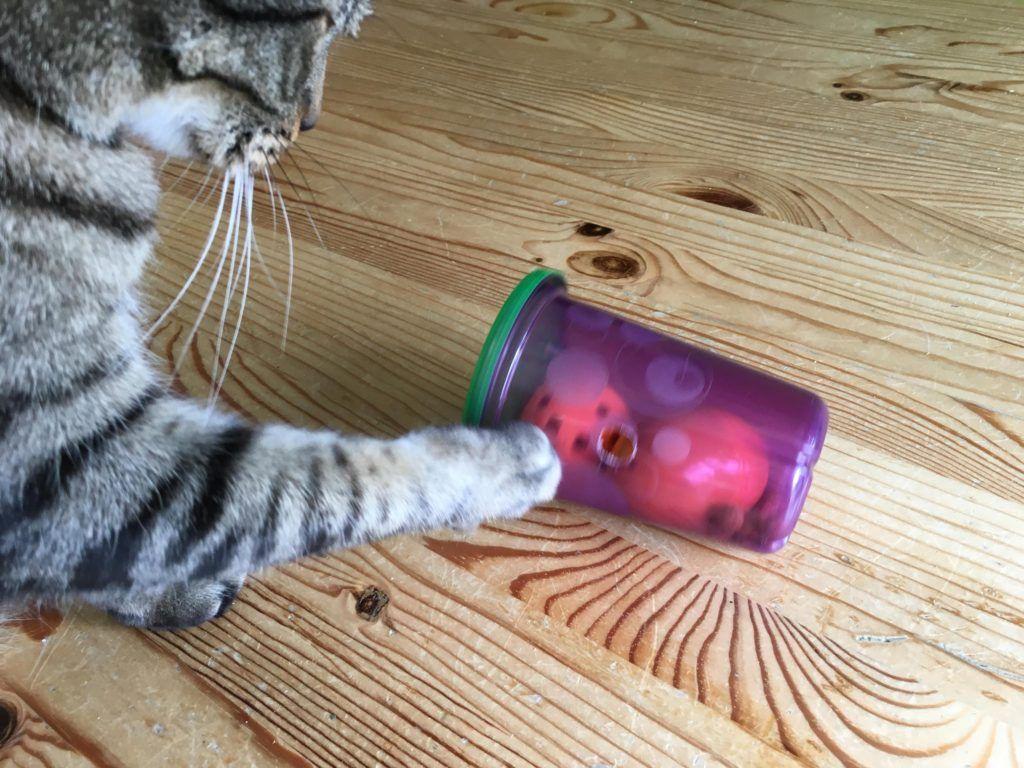 Pin On Cat Behvior