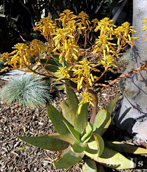 """What's Blooming In Santa Barbara Now""."