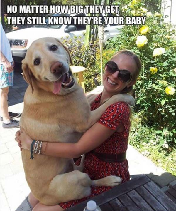 Funny Quotes And Dogs Pictures New 30 Funny Dogs Giant Dogs