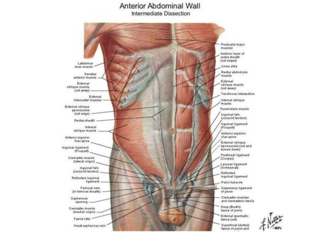 Lower Abdomen Diagram Male Trusted Wiring Diagram Online