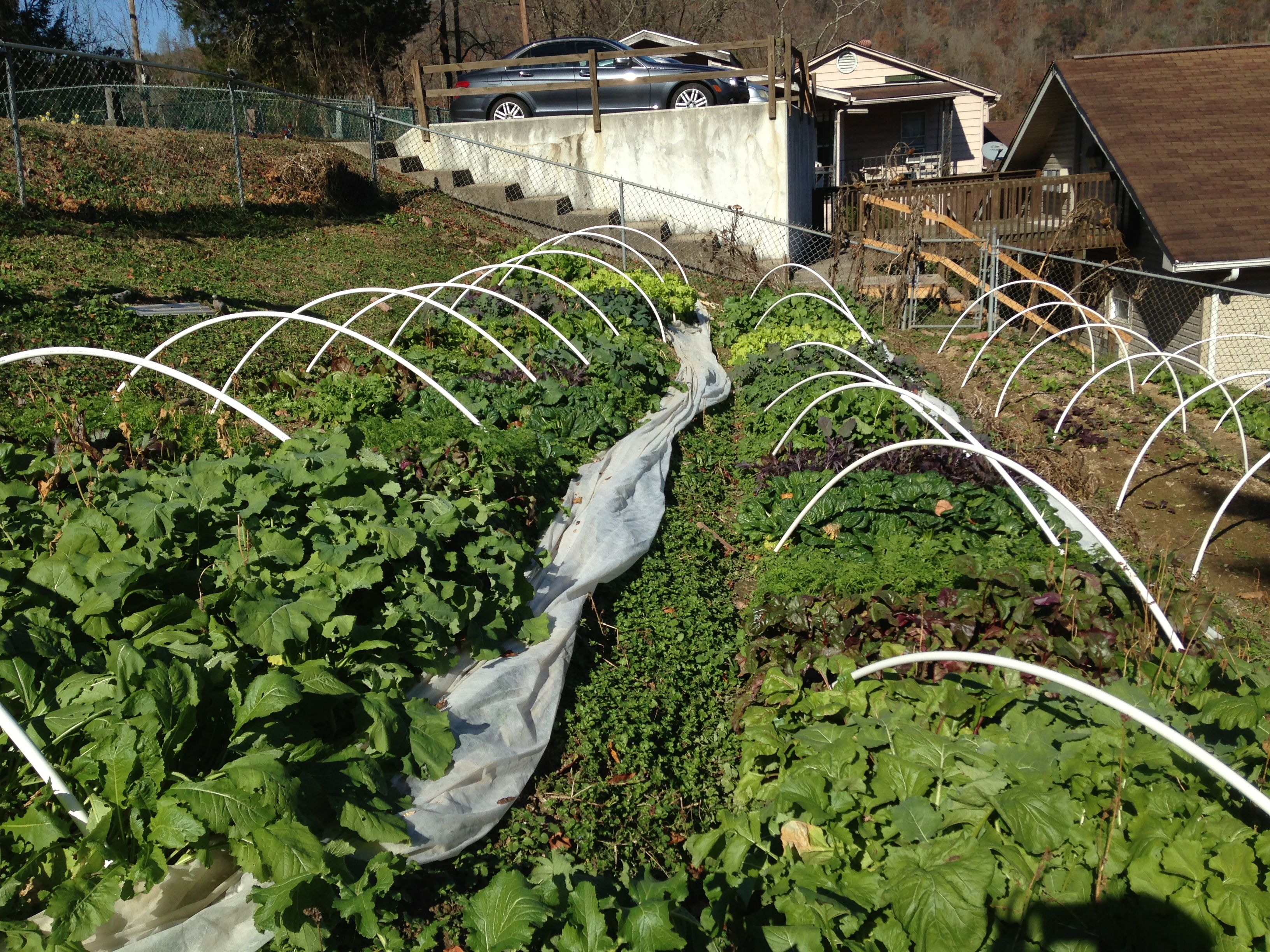 how to build a low tunnel tomato supports cages pinterest