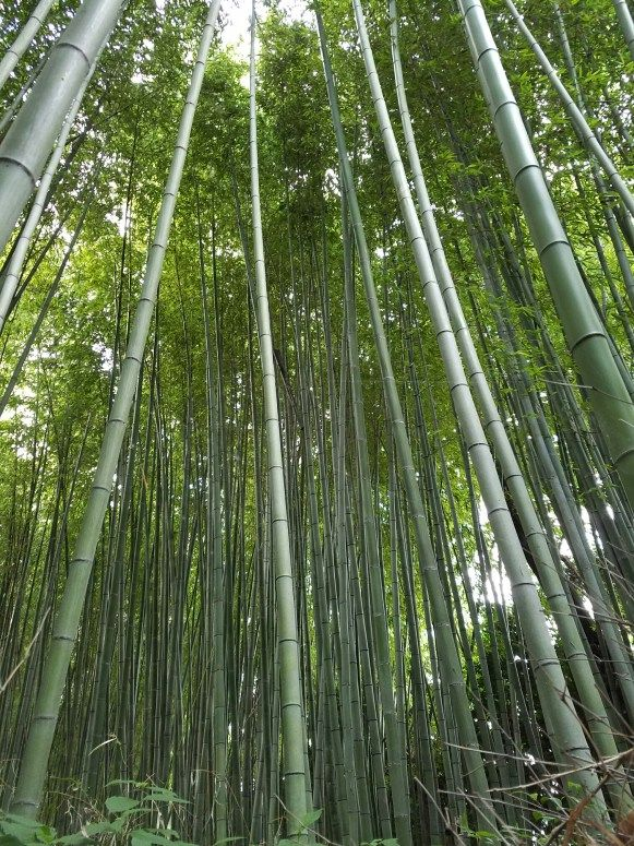 Knowing how much time to allow for your trip can be tricky! Click here to check out our 7 and 10 day itineraries for Japan!
