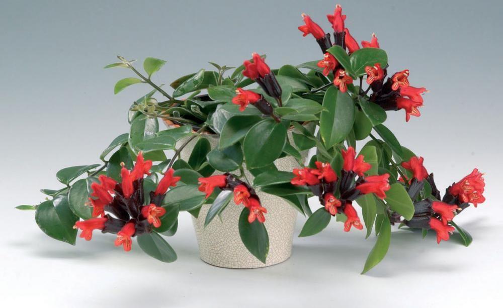 Grünpflanzen Für Dunkle Ecken 11 zimmerpflanzen für dunkle ecken ampelpflanzen vermeiden und magen