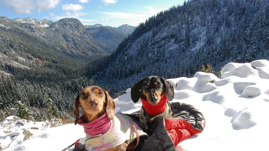 Hiking With Dogs Dachshund Duo Exceeds Short Legged Stereotypes