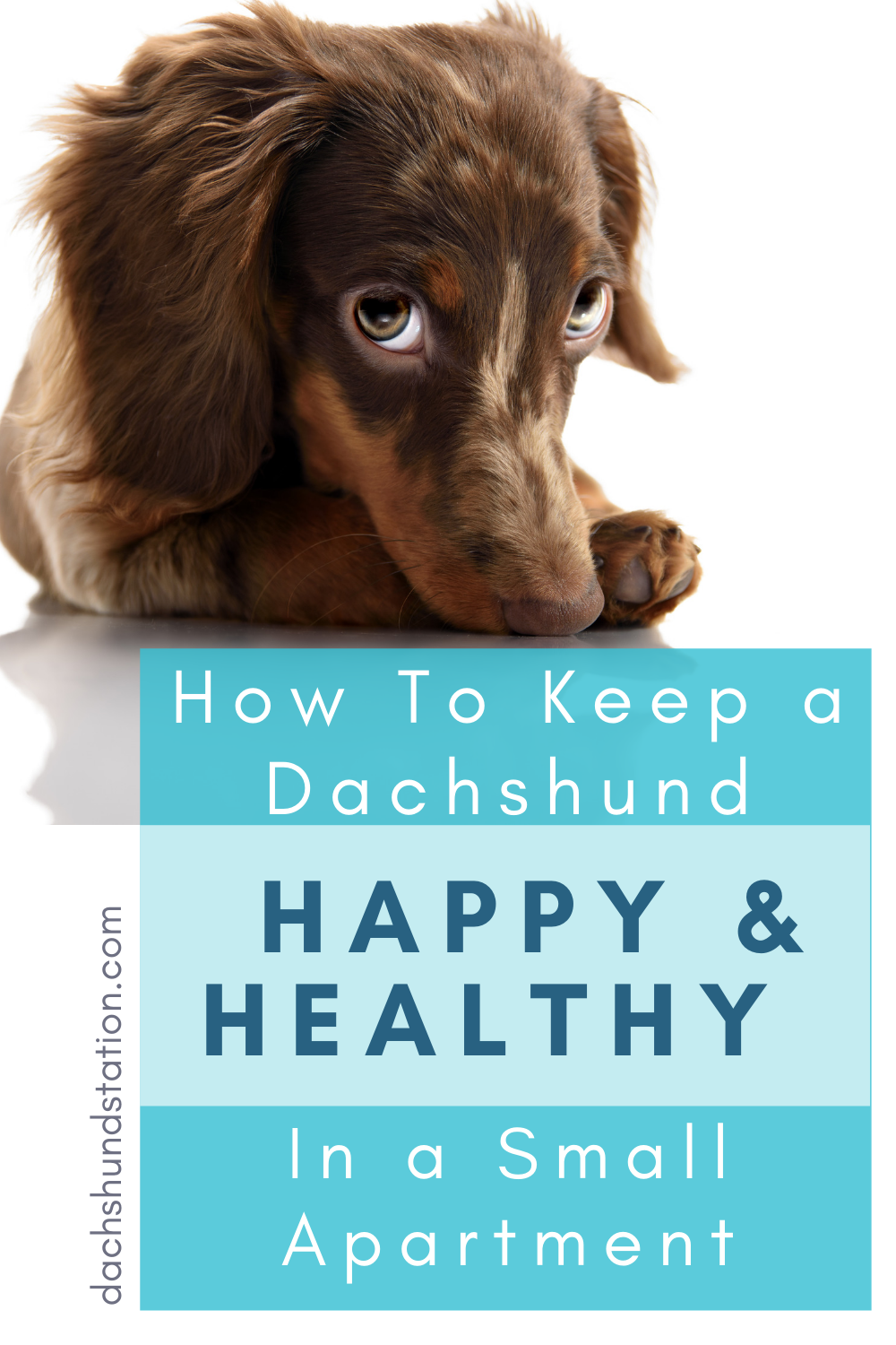Pin On Dogs Health And Tips Community