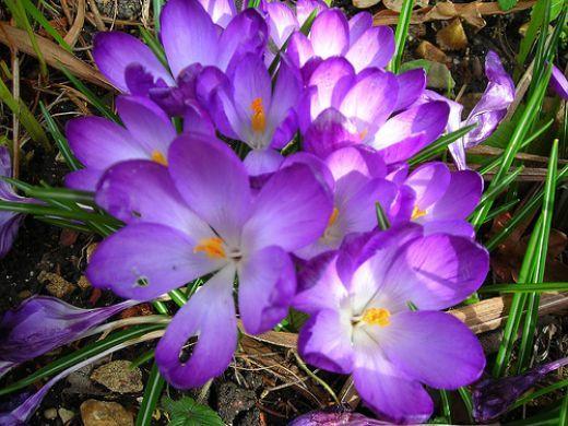 list of flower names | flowers, flower and gardens