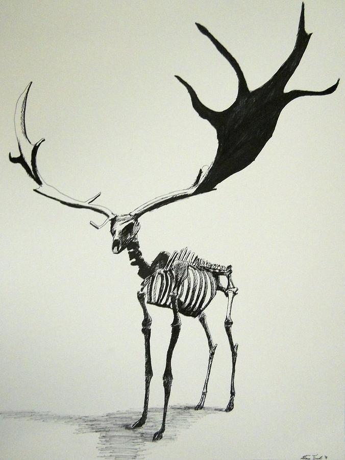 lion skeleton anatomy - Google Search | skeletons :3 | Pinterest ...