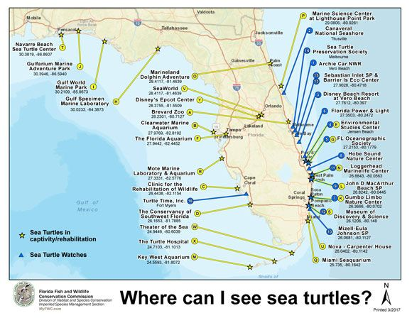 Los Cayos Florida Map.Map Of Places To See Sea Turles Florida Keys Pinterest