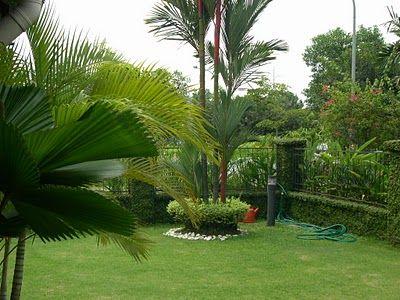 Garden Ideas Palm Trees Garden Small Backyard Landscaping Tree