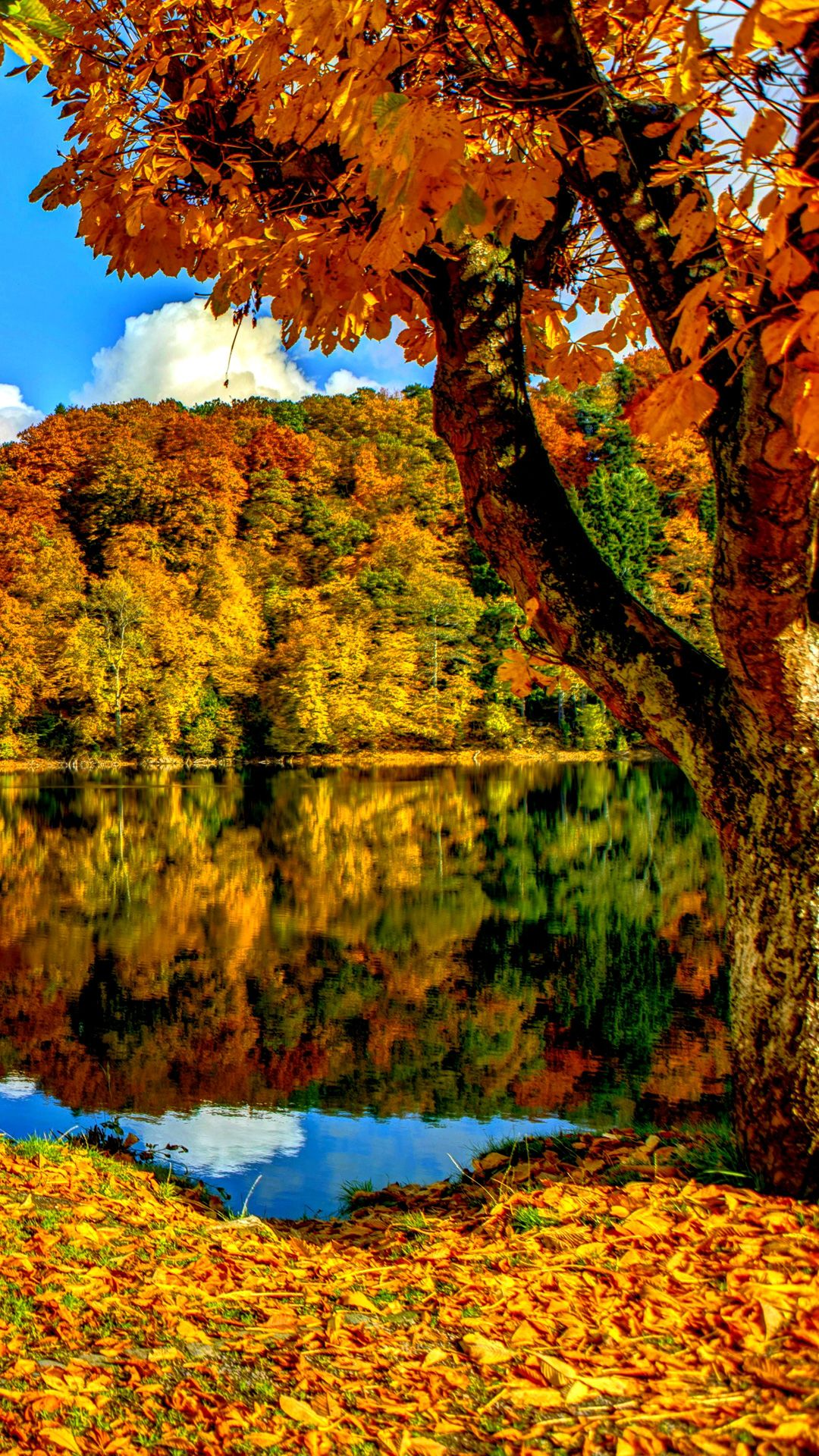 Red Autumn Trees Wallpaper Iphone Bing Images Tree Wallpaper Iphone New Wallpaper Iphone Autumn Scenery