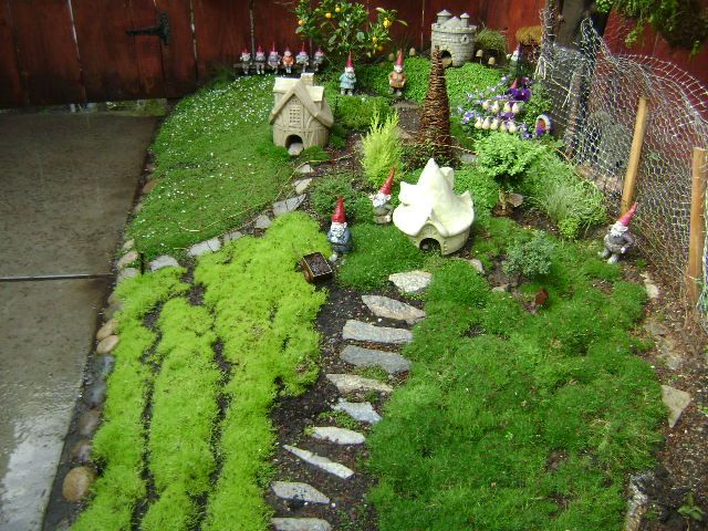 My Miniature Gnome Garden 1 Year In The Making Fairy Garden Flowers Fairy Garden Plants Gnome Garden