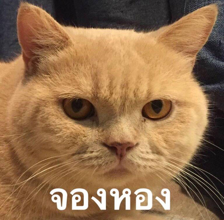 ภาพตลก ม มตลกๆ ร ปแมวขำๆ