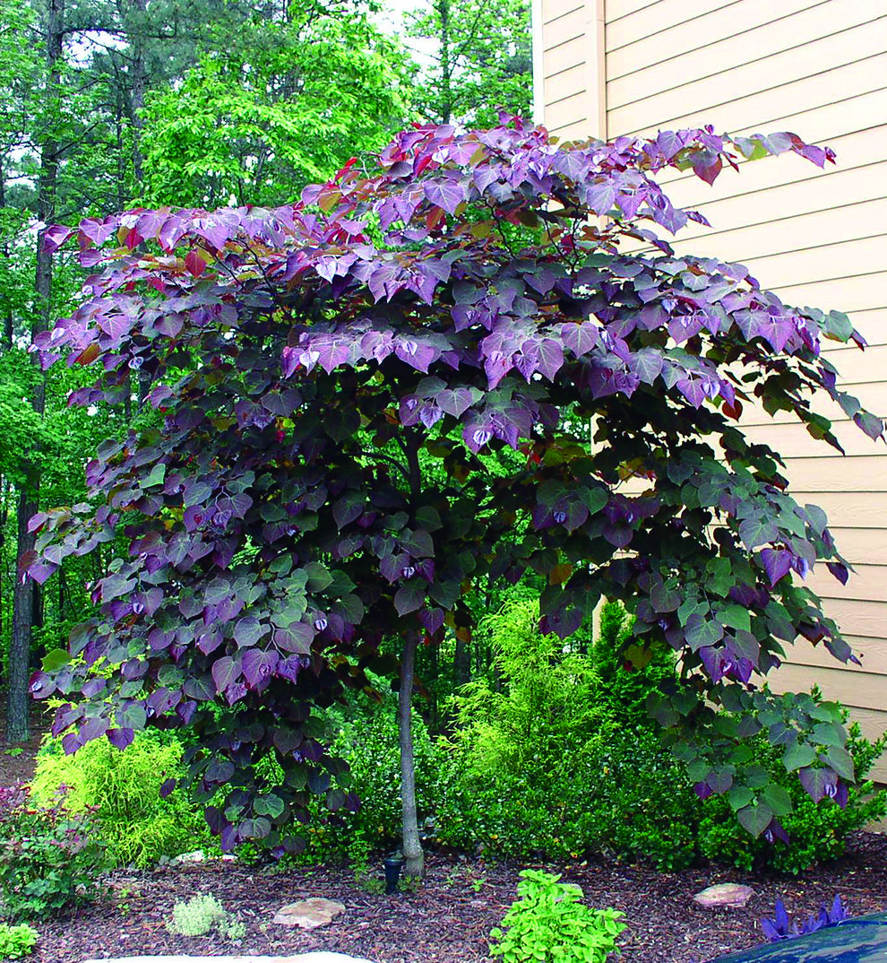 Small Trees For Borders: Small Front Yard Landscaping, Small Trees