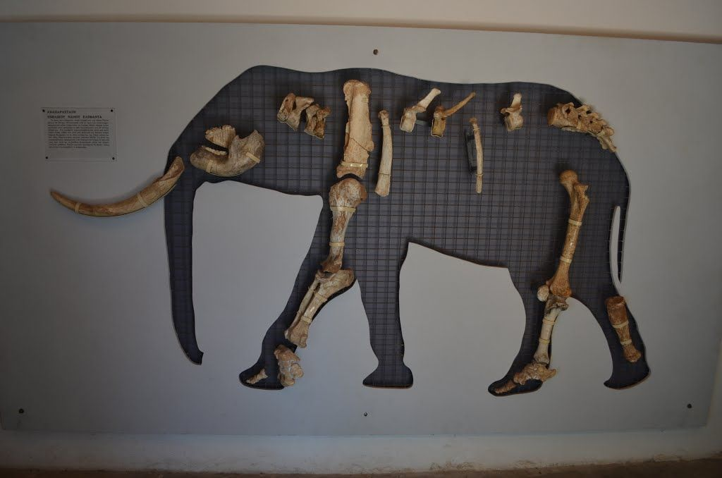 Tilos dwarf elephant reconstruction