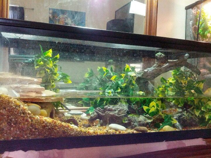 Fire belly newt with goldfish terrarium tank for Fish tank fireplace