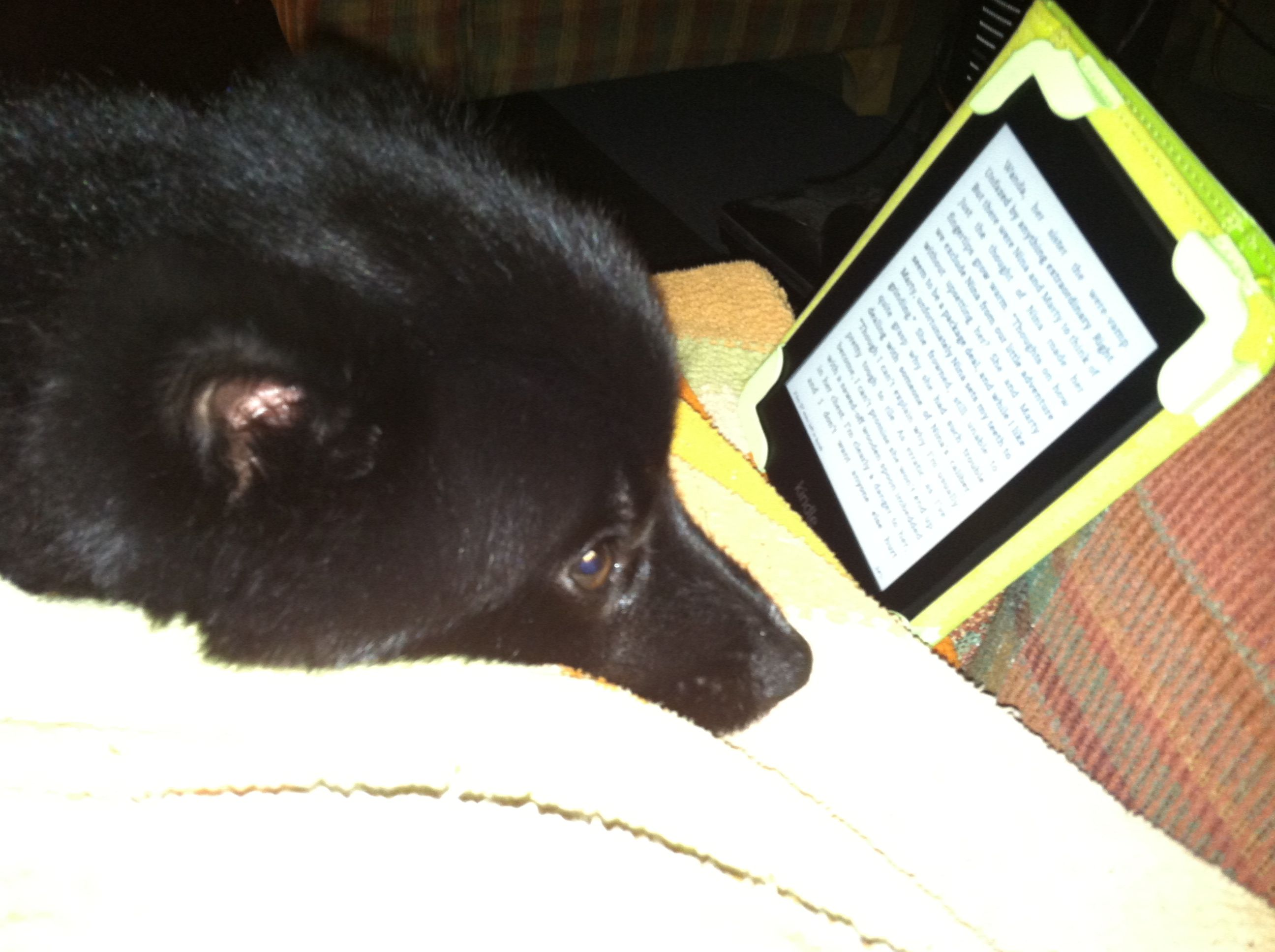 29 best dogs love books too images on pinterest cute dogs