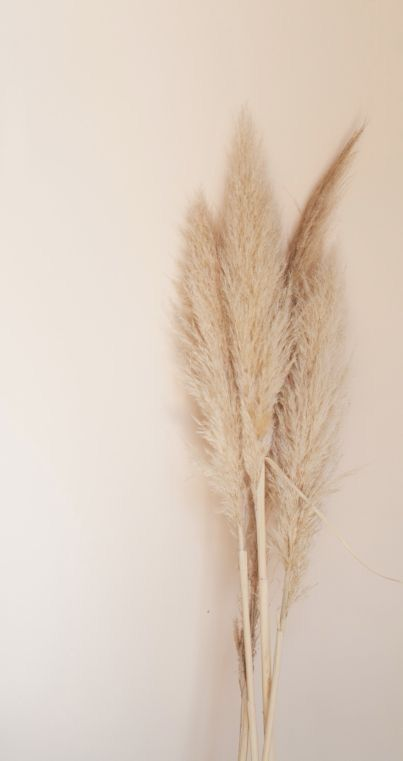 450+Large Dried Pampas Grass Beige Aesthetic Blog CLICK PHOTO FOR BLOG