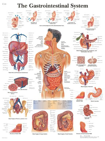 human anatomy chart doctor office and human anatomy on pinterest anatomy office