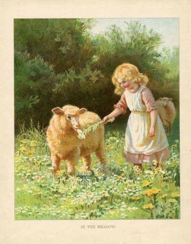 Victorian Girl Feeding Sheep Print 1907 Chromolitho Blonde Child | eBay