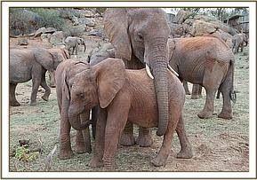 Elephant love ❤️