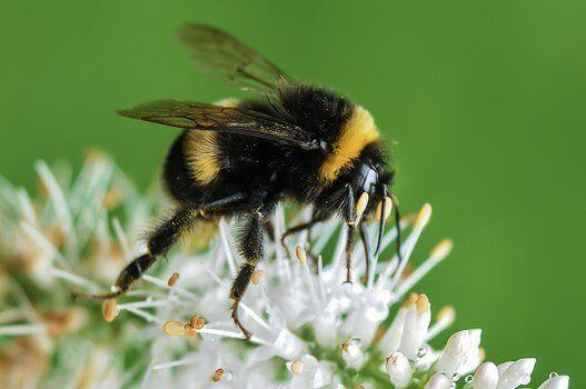 How To Get Rid Of Bees Naturally Carefully Diy Shareable Bumble Bee Bee Friendly Bee