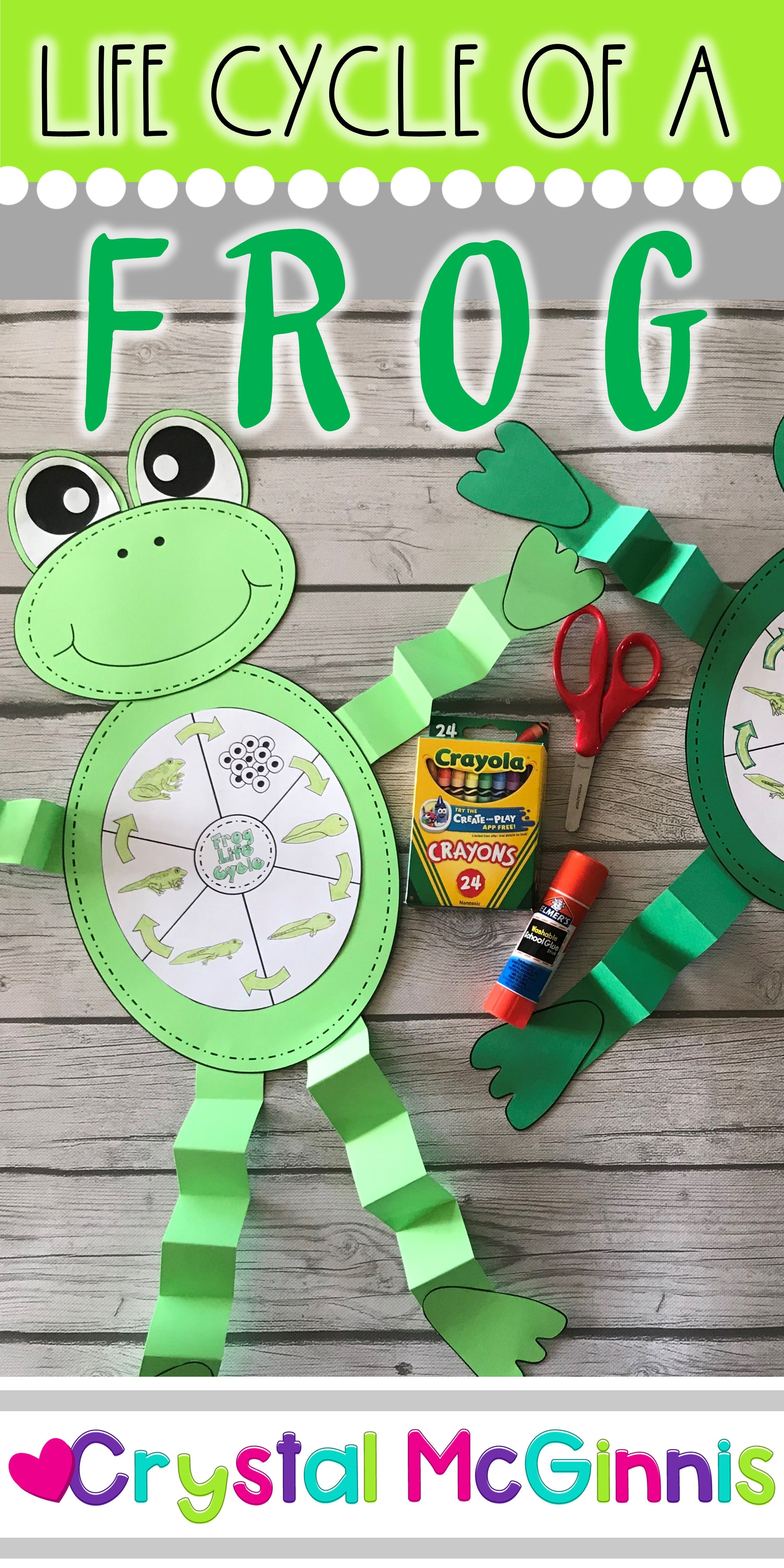 Life Cycle Of A Frog Craft In