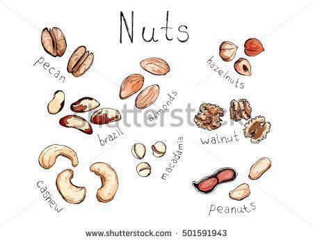 Hand Drawn Sketch Illustration Set Kind Of Nuts Cashew Peanuts Almonds Macadamia Hazelnuts Pecan Brazil Walnut With L How To Draw Hands Illustration Nuts