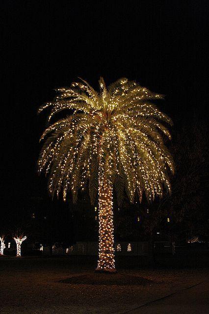 Christmas Palm Tree #merry_christmas #palm DIY Christmas Lights