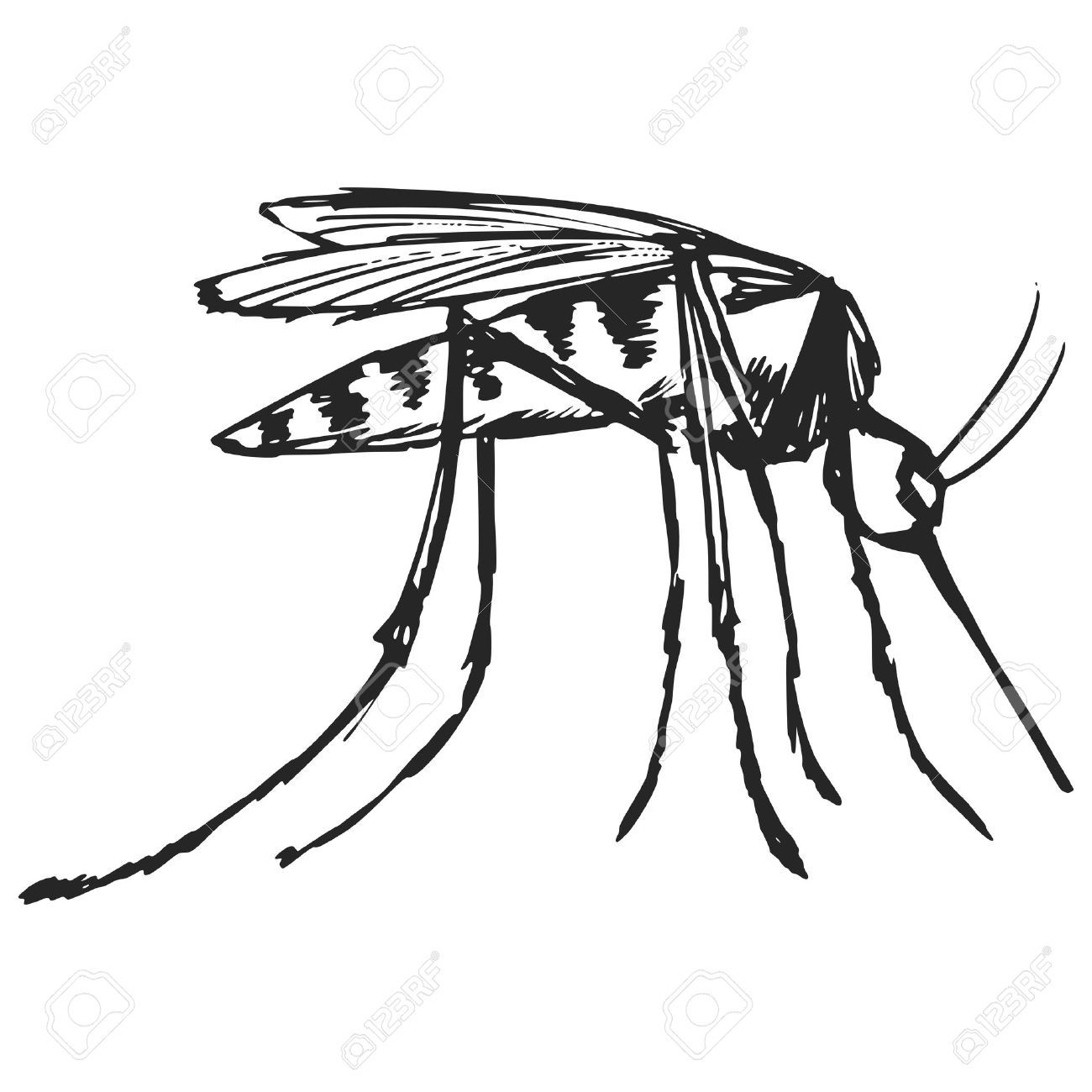 Hand Drawn Sketch Cartoon Illustration Of Mosquito Cartoon Illustration How To Draw Hands Mosquito Drawing