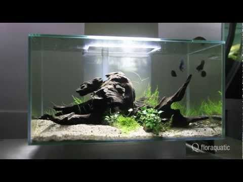 Fluval Edge   Google Search