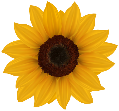 Sunflower PNG Clipart Image Sunflower png, Sunflower