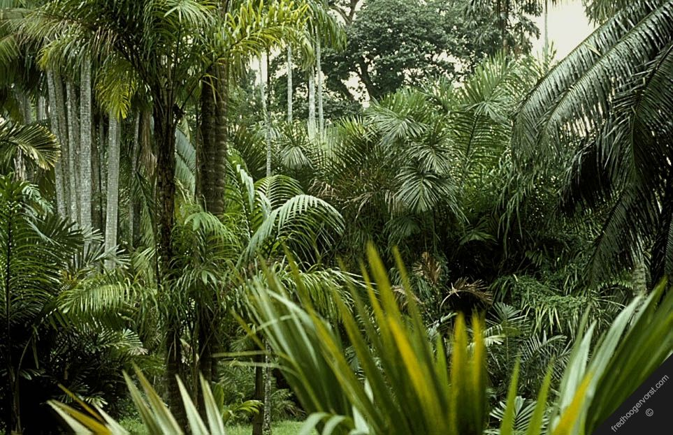 indonesia sumatra tropical rainforest nature flora rain