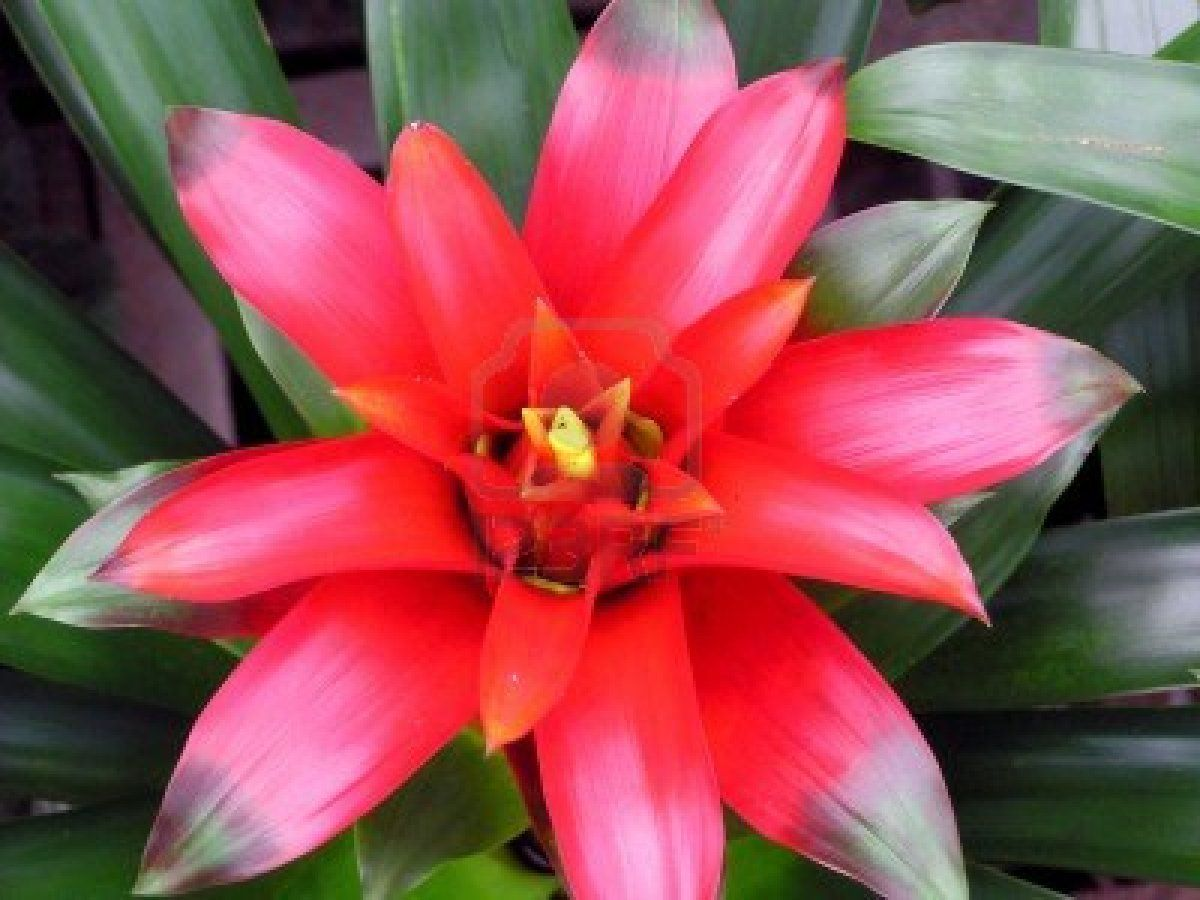 Tropical Rain Forest Bromeliads Can Grow In The Ground