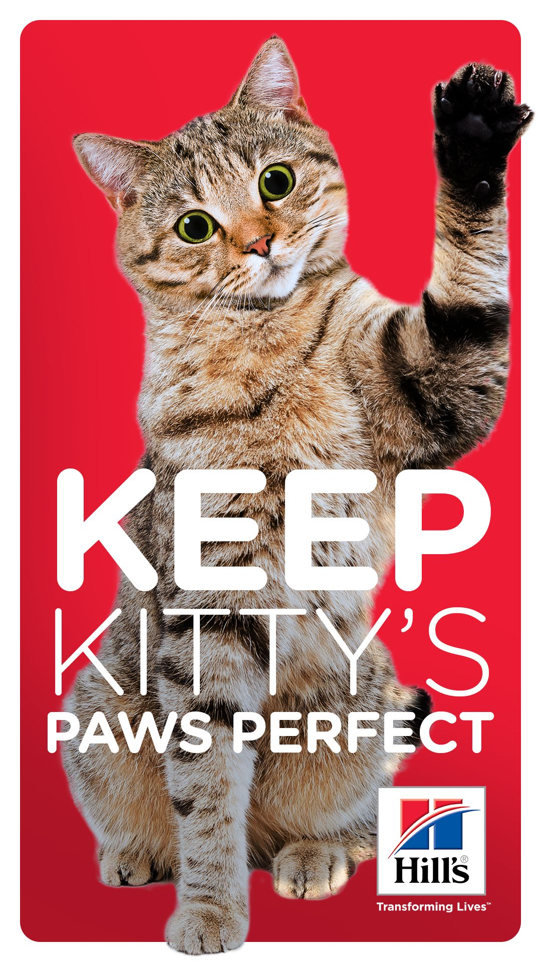 How to Care for Your Cat's Paw Pads Cat paws, Kitty, Cats
