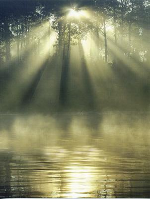 Misty sunlight