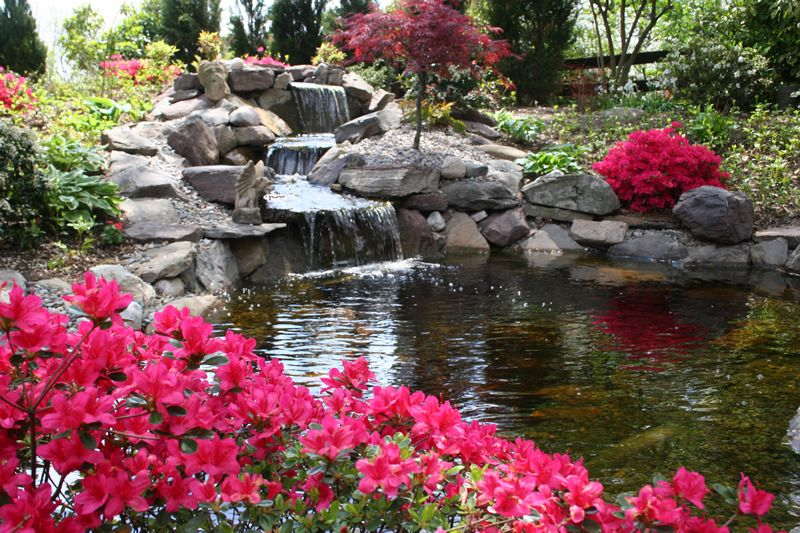 Natural landscaping around koi ponds landscape plantings for Landscaping around a small pond