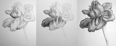 Drawing tonal rose