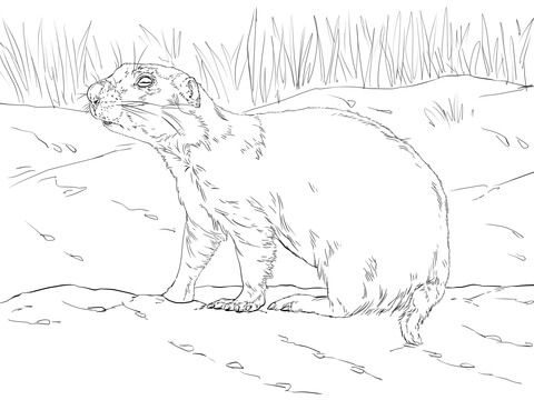 Realistic Prairie Dog Coloring Page Dog Coloring Page Animal