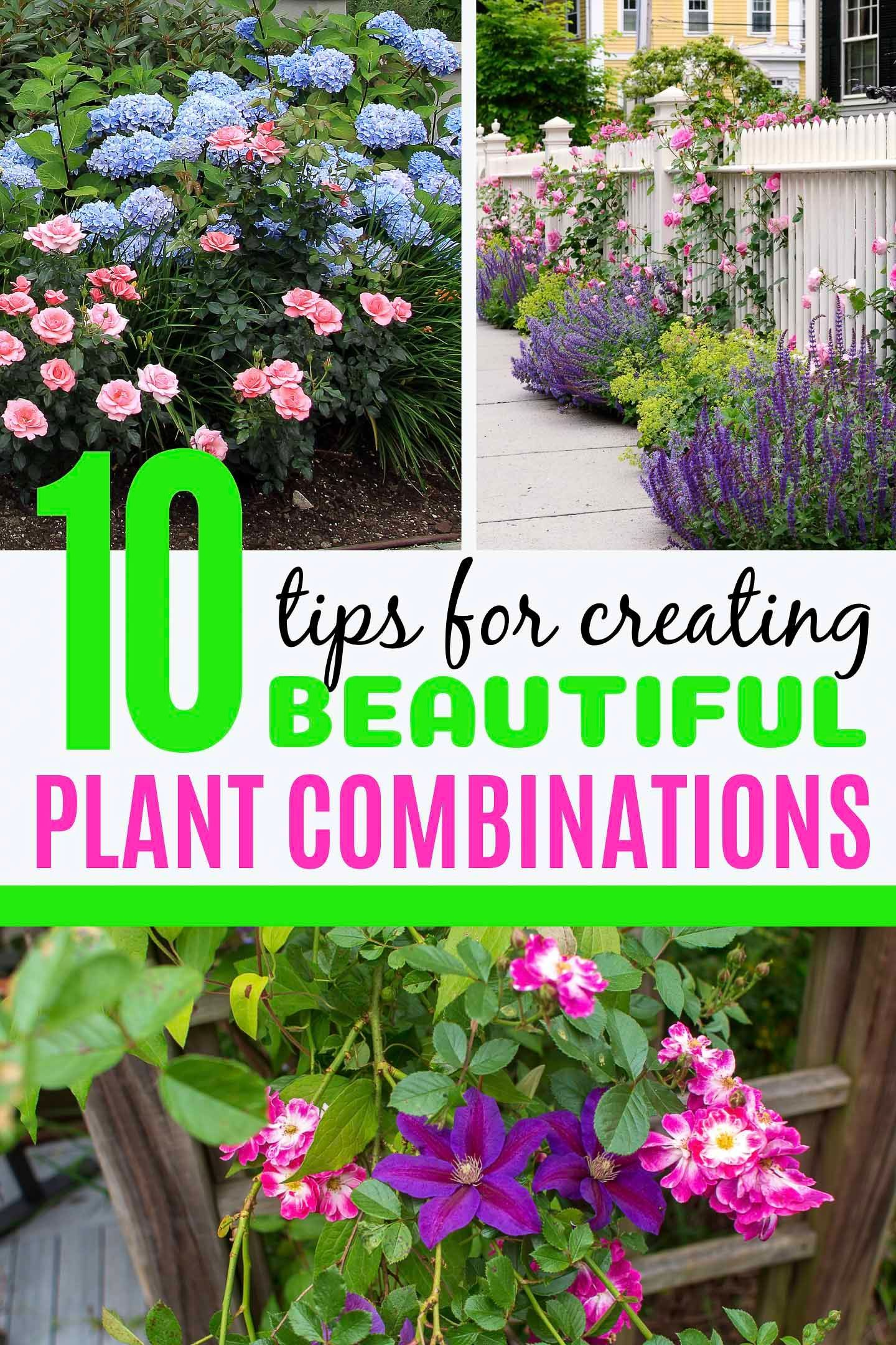 10 Tips For Creating Plant Combinations That Work is part of Plants, Plant combinations, Perennial garden, Landscaping trees, Easy backyard landscaping, Garden design - These tips for creating plant combinations that work will take the guesswork out of landscaping a beautiful garden for your yard