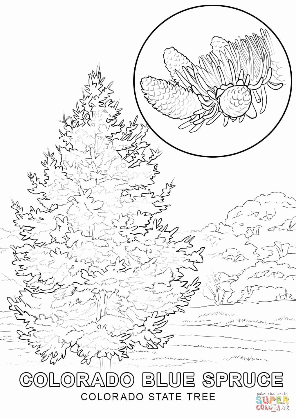 Wyoming State Flag Coloring Page Beautiful New Jersey State Flower