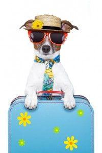 International Travel Pet Transport Melbourne Pet Express