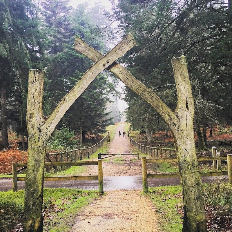 7 Great Things To Do In The New Forest Ladies What Travel Travel