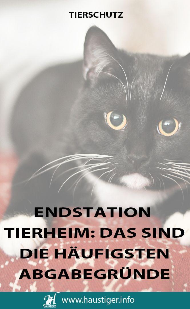 Studie Abgabegründe bei Katzen Haustiger (Tierheim