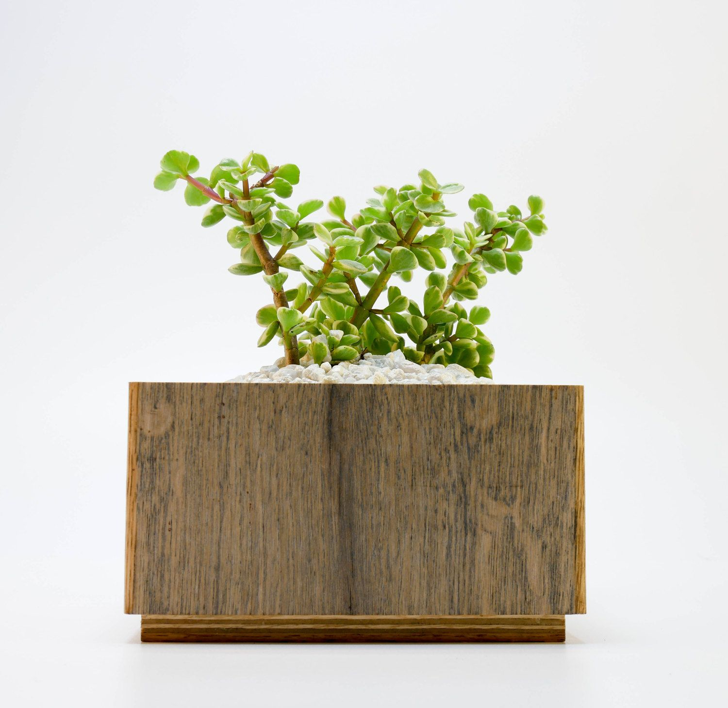 hanging pots indoor wolf plant planter wild planters best boxes
