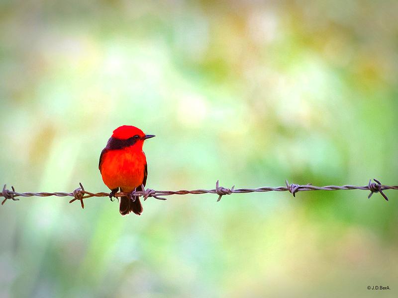 Palabras 2 0 Sinfonia Para Dos Petirrojos En 2020 Pajaros Hermosos Arte De Aves Petirrojos