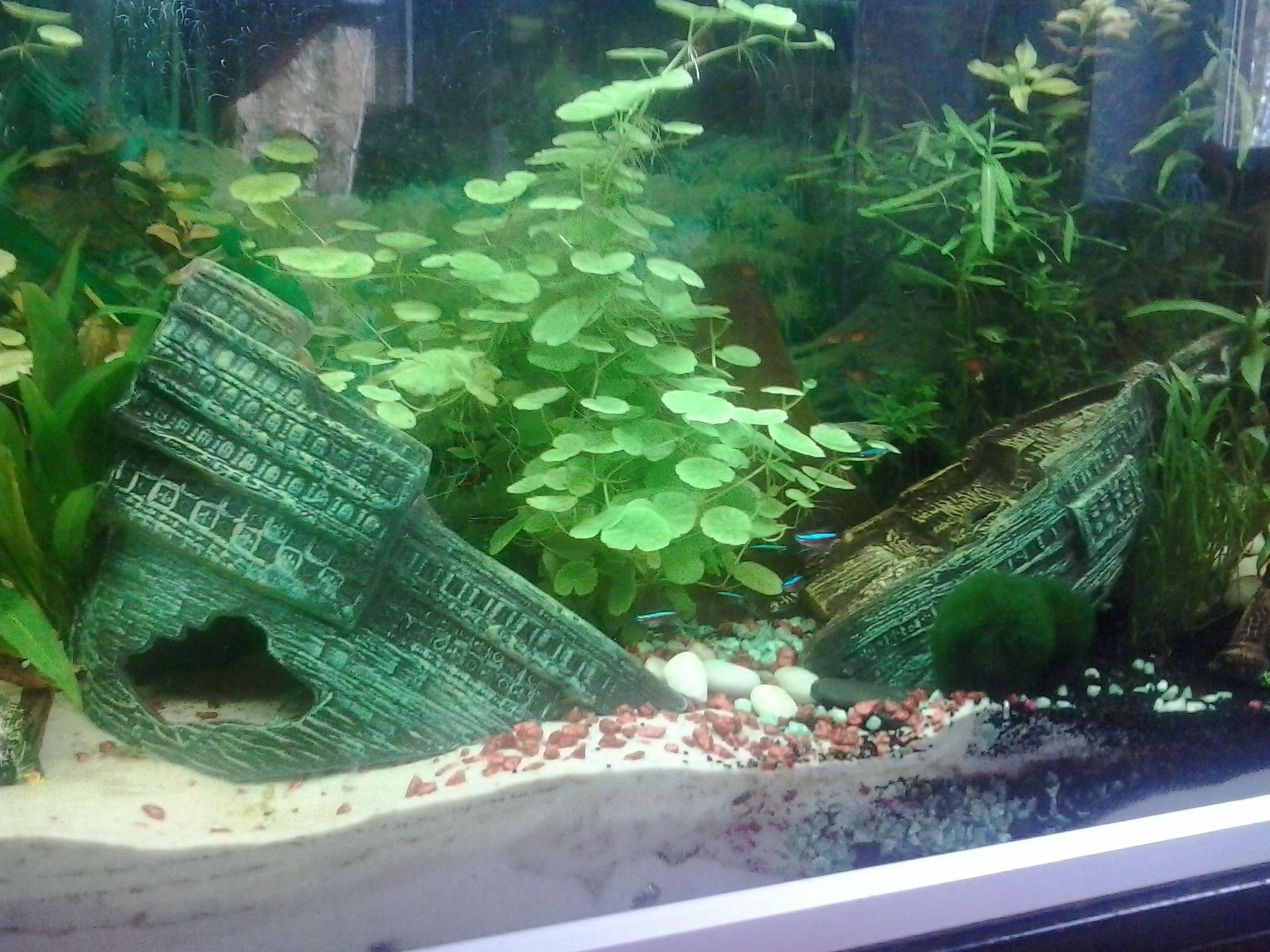 Pirate Aquarium Schiffswrack Aquarium Flusskrebs