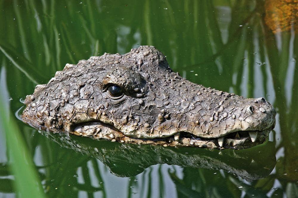 schwimmtier krokodil f r den gartenteich garten pinterest teich garten und teich deko. Black Bedroom Furniture Sets. Home Design Ideas