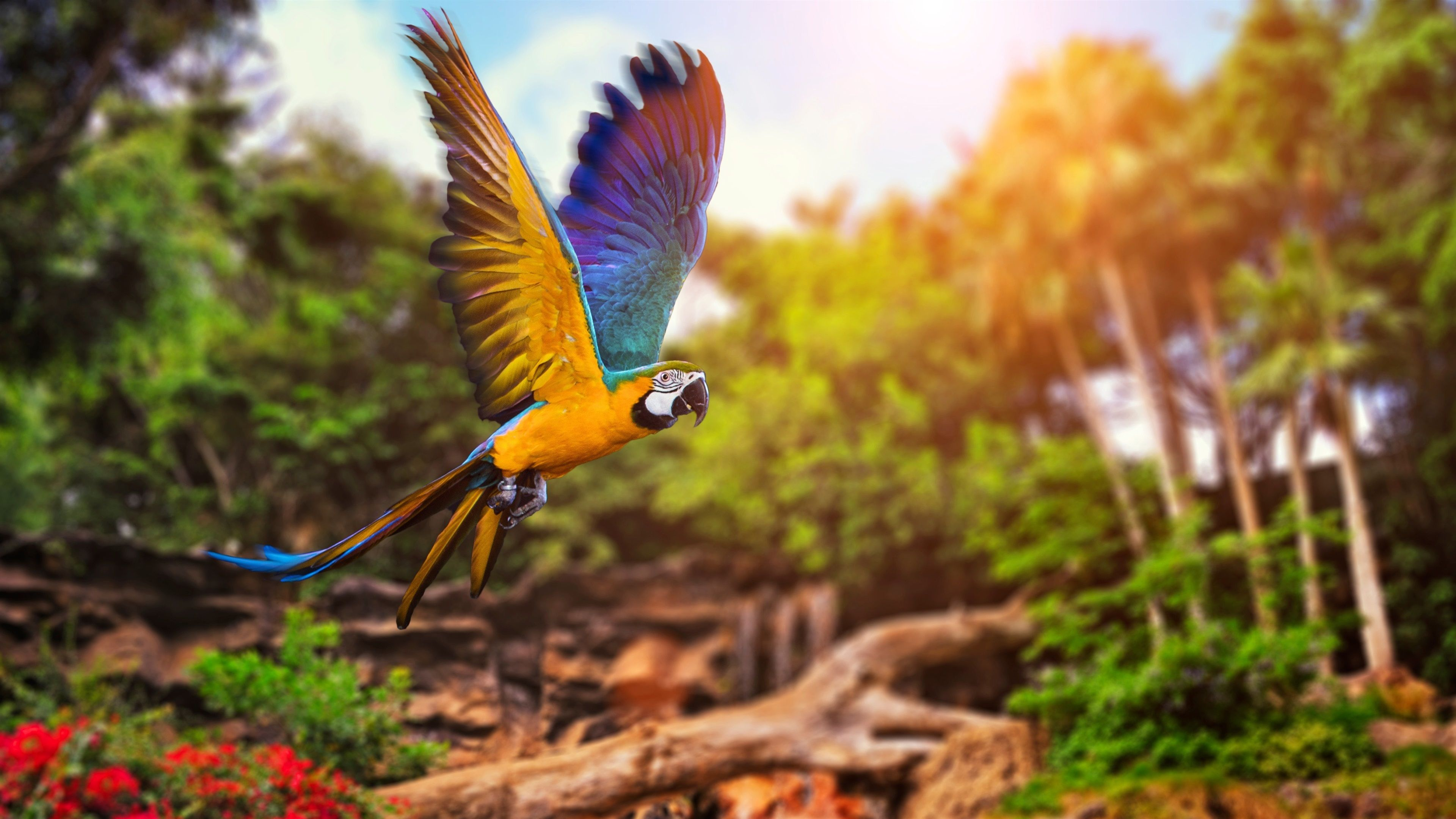Parrot Flying In Forest Wallpaper 3840x2160 Uhd 4k Parrot