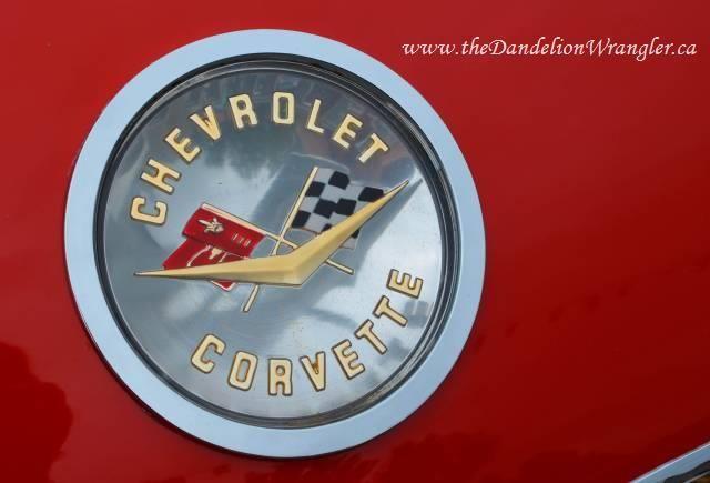 Images from the #PortCoquitlam Car Show. #poco100 via www.theDandelionWrangler.ca
